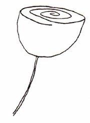 как нарисовать розу (31)