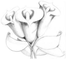лилия 10