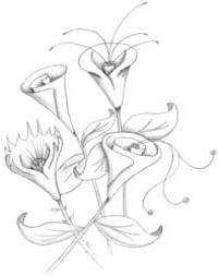 лилия 11
