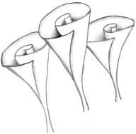 лилия 12