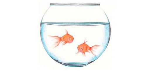 Как-нарисовать-рыбок-в-аквариуме-цветными-карандашами-миниатюра