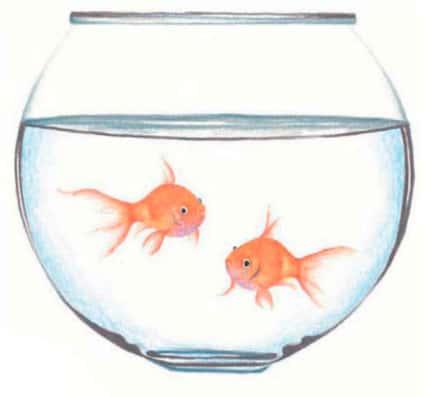 Как-нарисовать-рыбок-в-аквариуме-цветными-карандашами2