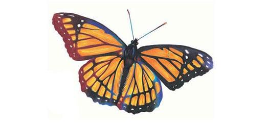 как-нарисовать-бабочку-цветными-карандашами-миниатюра