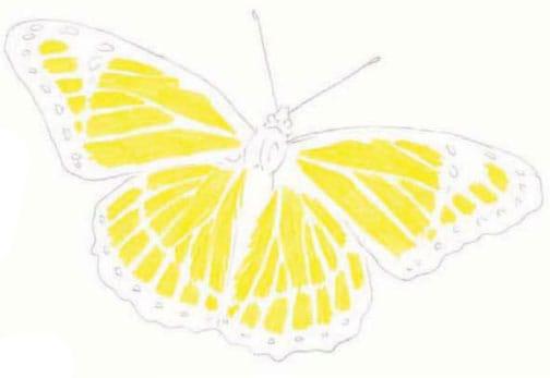 как-нарисовать-бабочку-цветными-карандашами2