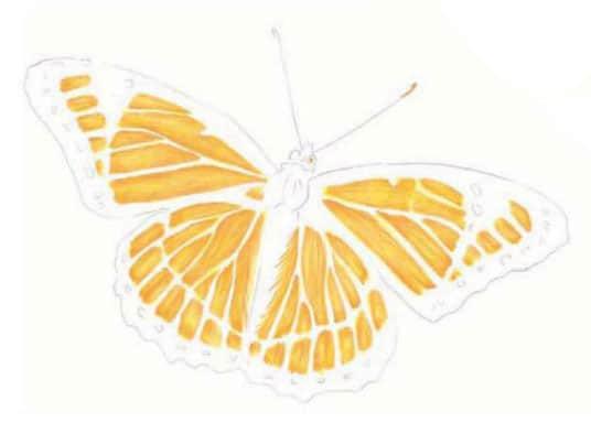 как-нарисовать-бабочку-цветными-карандашами3