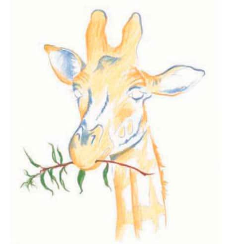 как-нарисовать-жирафа-цветными-карандашами3