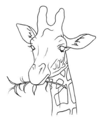 как-нарисовать-жирафа-цветными-карандашами6