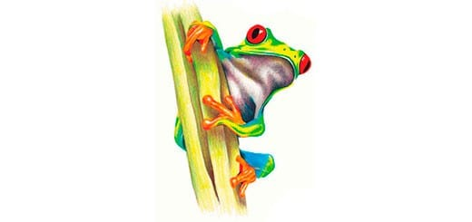 как-нарисовать-лягушку-цветными-карандашами-миниатюра