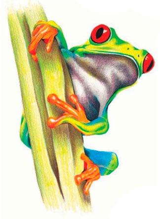 как-нарисовать-лягушку-цветными-карандашами5