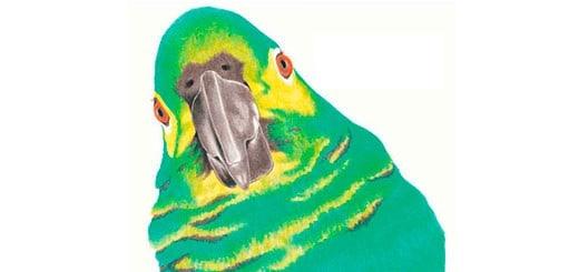 как-нарисовать-попугая-цветными-карандашами-миниатюра
