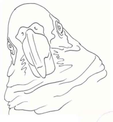 как-нарисовать-попугая-цветными-карандашами-0