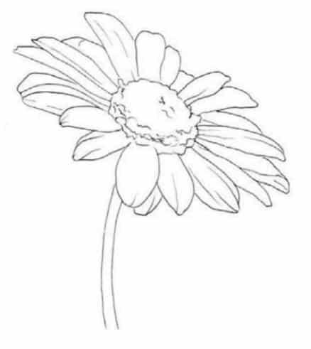 Рисунок карандашом ромашки поэтапно