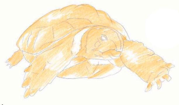 как-нарисовать-черепаху-2