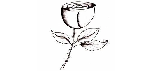 Как красиво нарисовать розу карандашом поэтапно