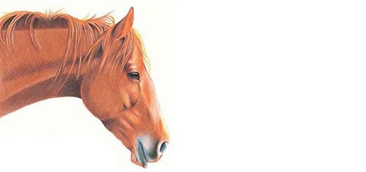 как-нарисовать-лошадь-цветными-карандашами-миниатюра