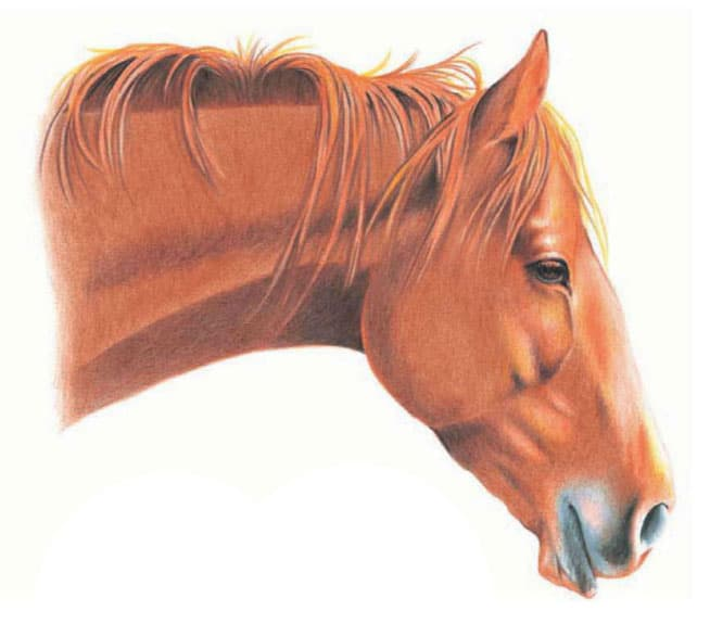 как-нарисовать-лошадь-цветными-карандашами