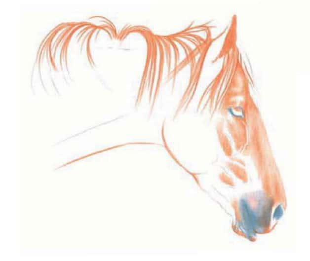 как-нарисовать-лошадь-цветными-карандашами3