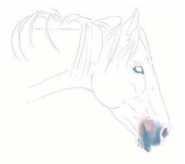 как-нарисовать-лошадь-цветными-карандашами4
