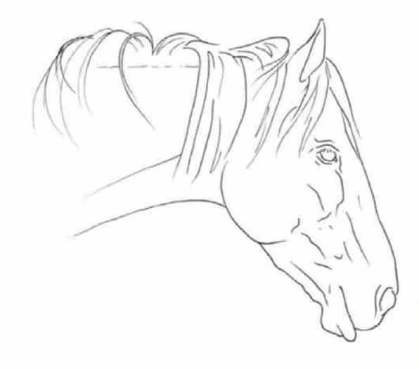 как-нарисовать-лошадь-цветными-карандашами5