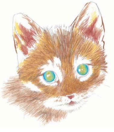 как-нарисовать-котенка