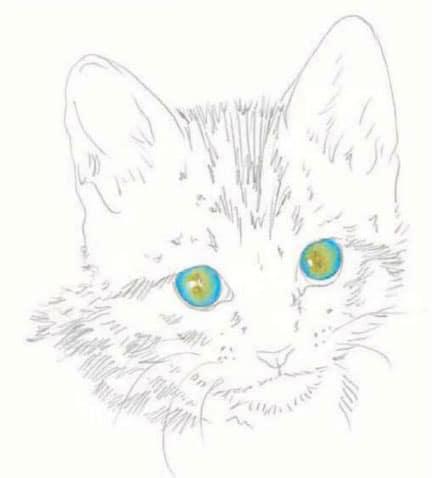 как-нарисовать-котенка3