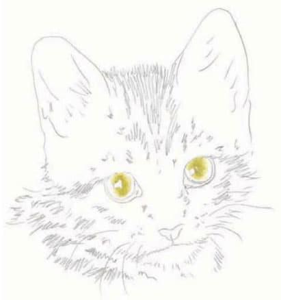 как-нарисовать-котенка5