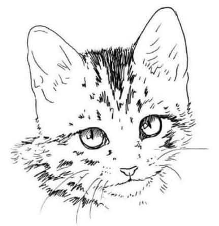 Нарисовать черного и белого кота