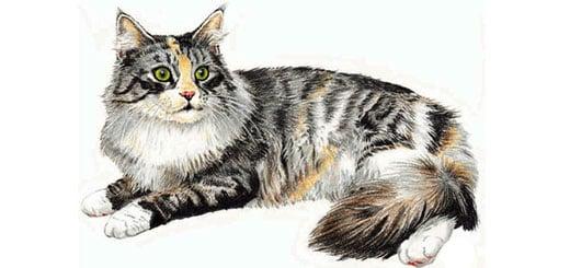 как-нарисовать-кошку-миниатюра