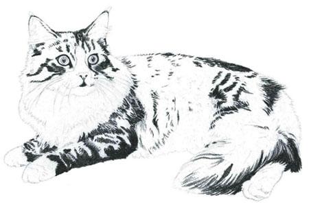 как нарисовать кошку поэтапно (3)