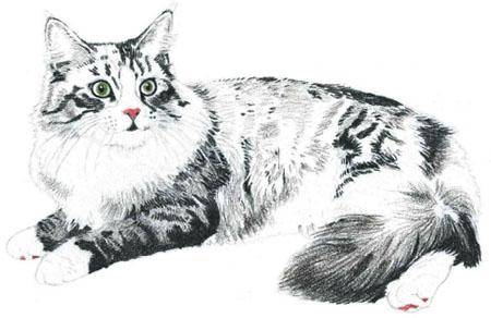 как нарисовать кошку поэтапно (4)