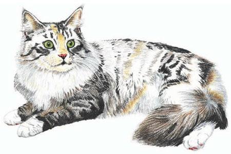 как нарисовать кошку поэтапно (5)