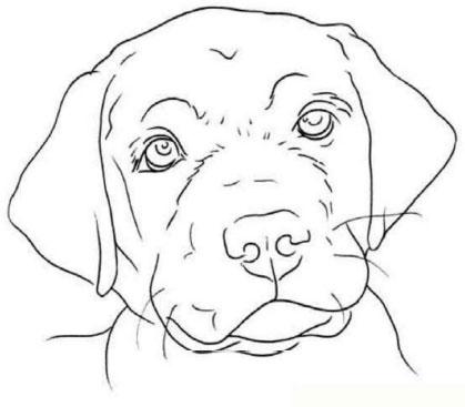 как нарисовать щенка цветными карандашами (2)