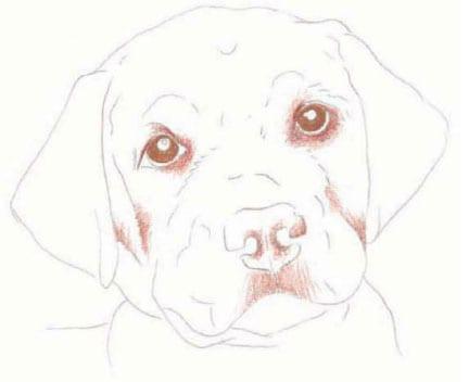 как нарисовать щенка цветными карандашами (3)