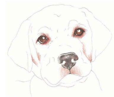 как нарисовать щенка цветными карандашами (4)