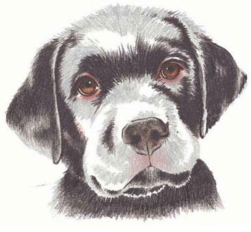 как нарисовать щенка цветными карандашами (6)
