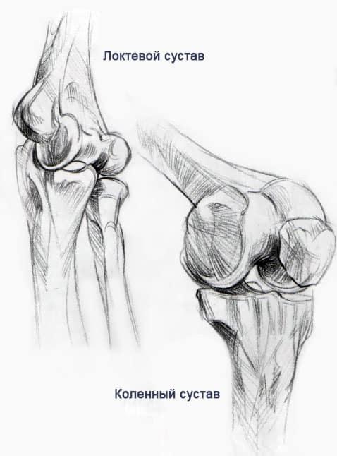 Анатомия и структура человека для художников. Мышцы и кости (2)