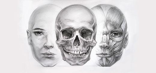 Мышцы-и-кости-мини