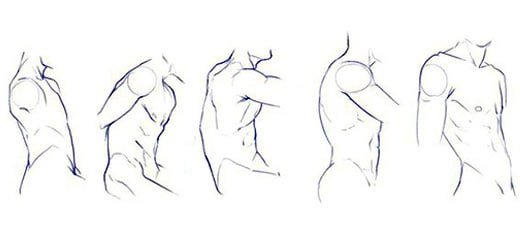 как-рисовать-торс-и-плечи