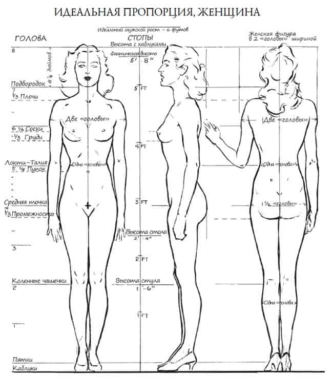 идеальная пропорция женщины