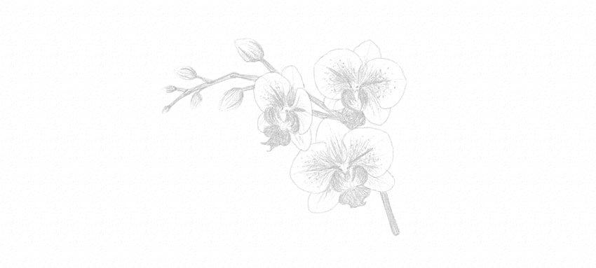 kak-narisovat-orxideyu-19