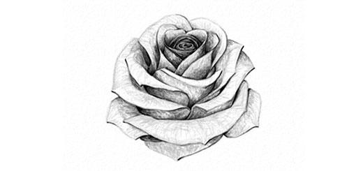 dessin et peinture vid o 2460 comment dessiner des roses au crayon tutoriel. Black Bedroom Furniture Sets. Home Design Ideas