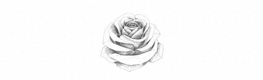 kak-narisovat-rozu-23