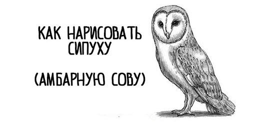 kak-narisovat-sovu-sipuxu-mini