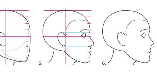 proporcii-lica