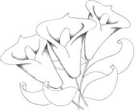 лилия мини