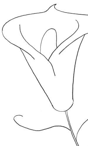 лилия 6