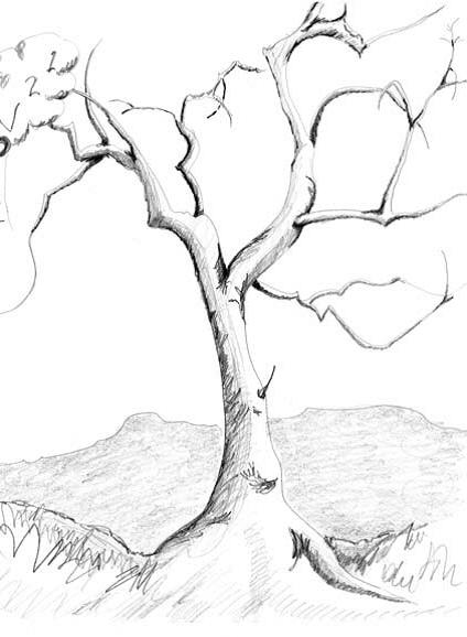 Деревья 14
