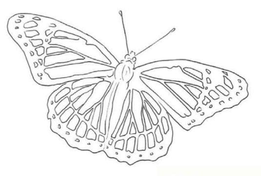 как-нарисовать-бабочку-цветными-карандашами1