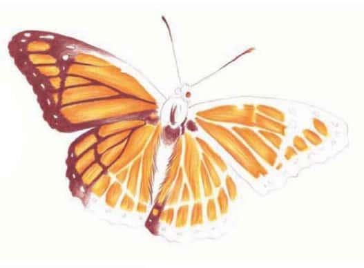 как-нарисовать-бабочку-цветными-карандашами4