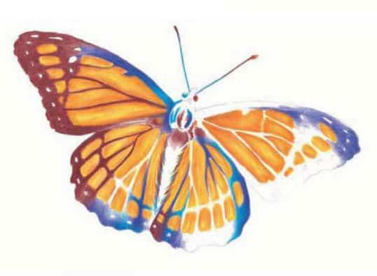 как-нарисовать-бабочку-цветными-карандашами5